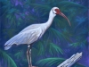 The Ibis, beauty only a moma can appreciate